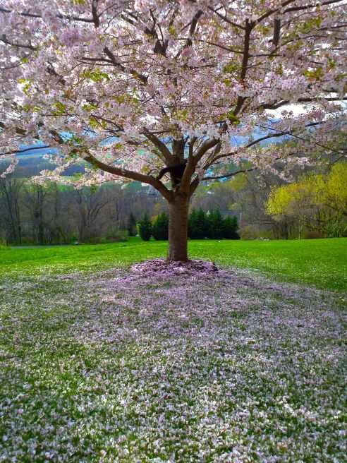 flower tree park landscape